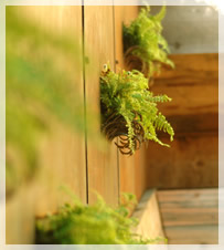 Living Walls & Roofs